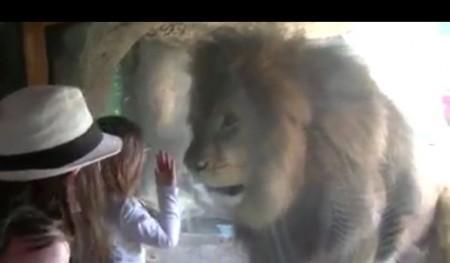 liongirlglass