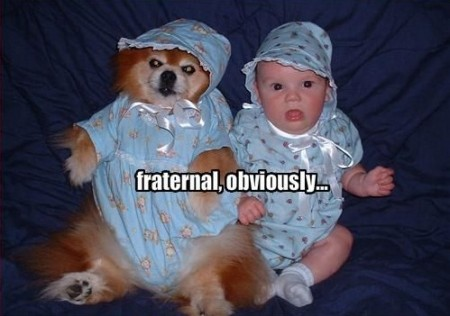 funny-dog-pictures-dog-and-baby-are-fraternal-twins