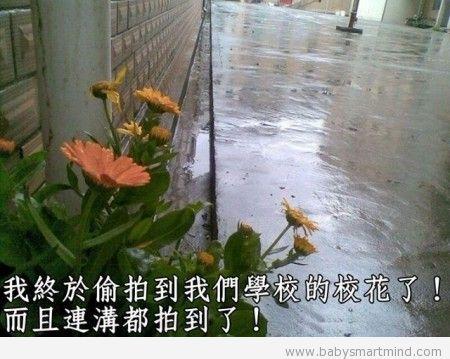 funny flower reiver deep v
