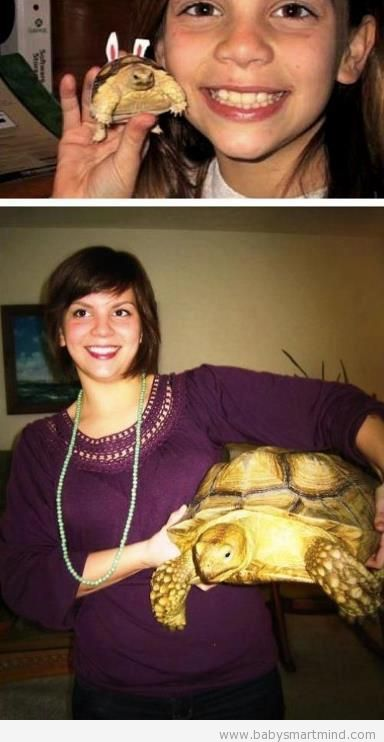 funny turtle grown up