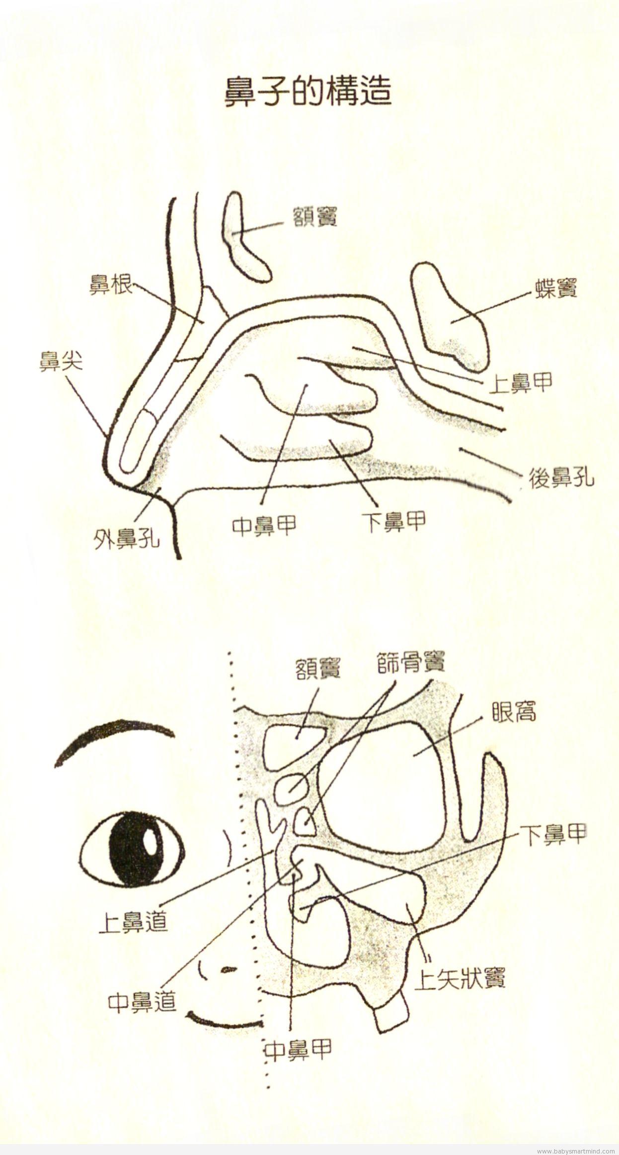 不要把鼻窦炎误以为感冒_乐乐简笔画
